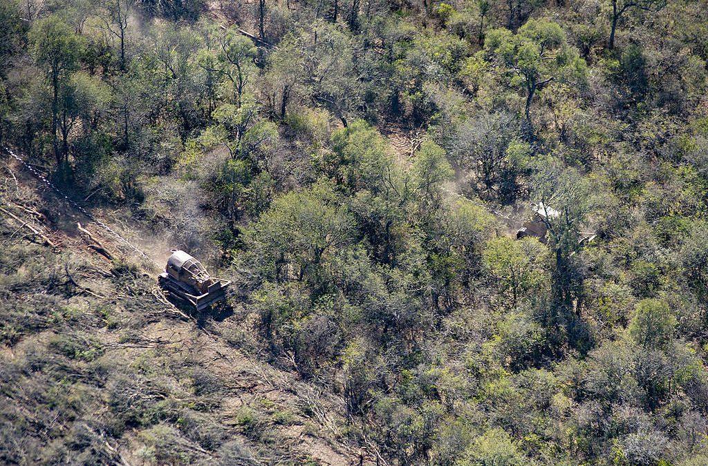 Carta de Greenpeace al gobernador Gustavo Sáenz para que se frenen los desmontes en Salta
